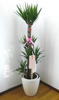 観葉植物に木札