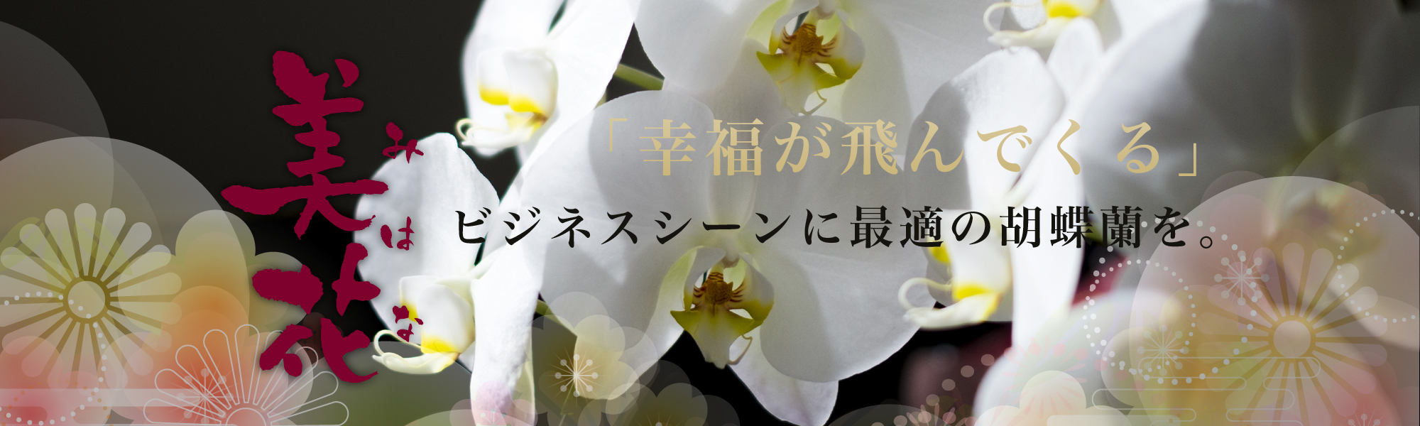 美花 ビジネスシーンに最適な胡蝶蘭を