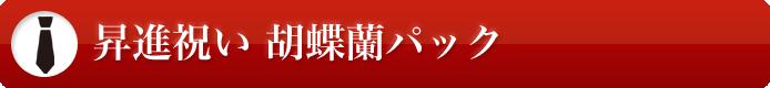 昇進祝い 胡蝶蘭パック