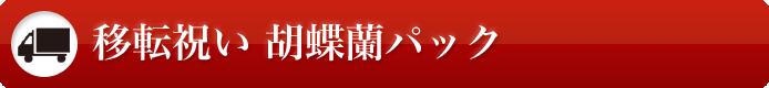 移転祝い 胡蝶蘭パック